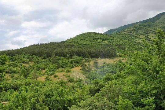 Компании Тимченко и Дерипаски не поделили лесные участки недалеко от «Усадьбы Дивноморское» под Геленджиком