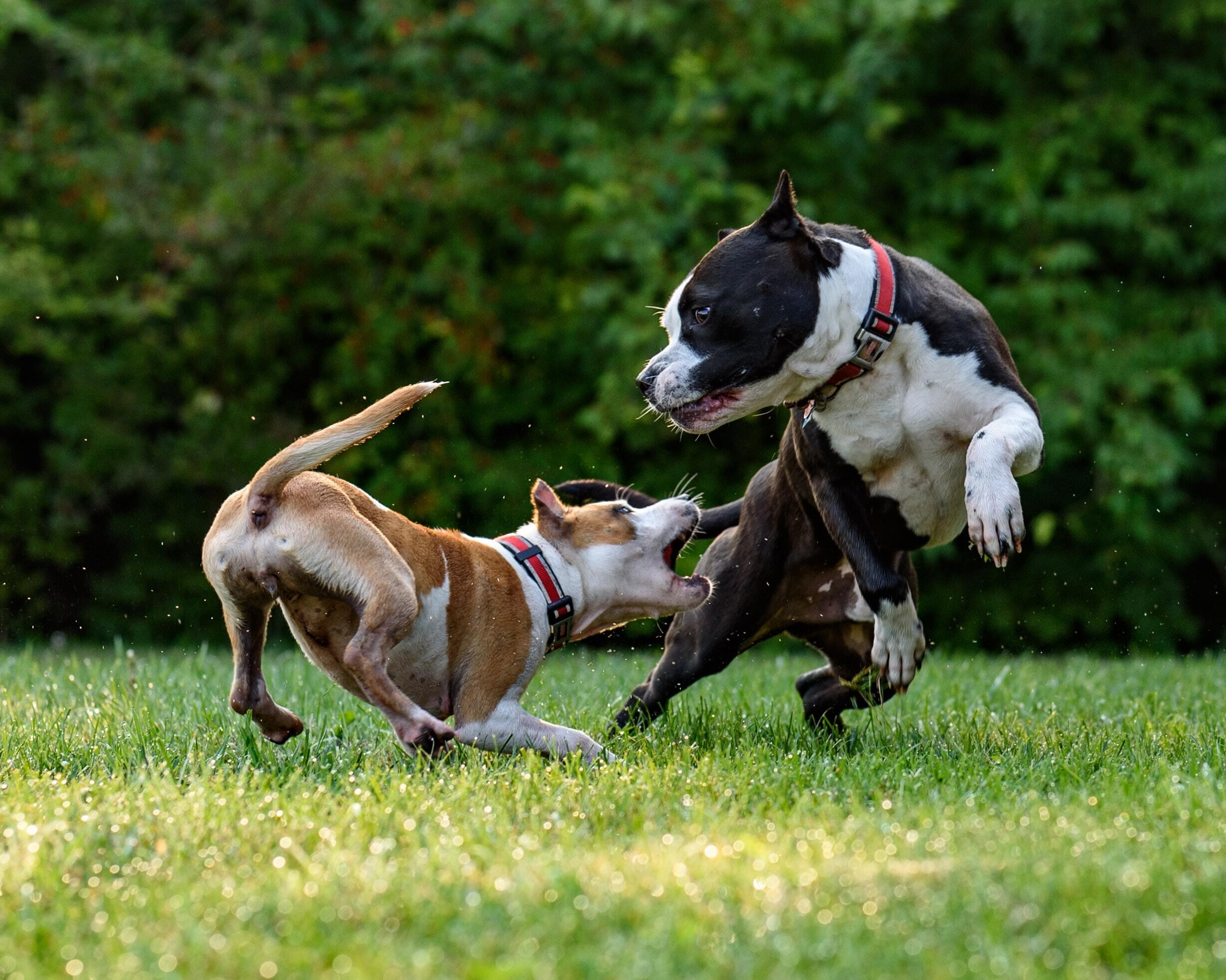 Учёные определили самых агрессивных собак
