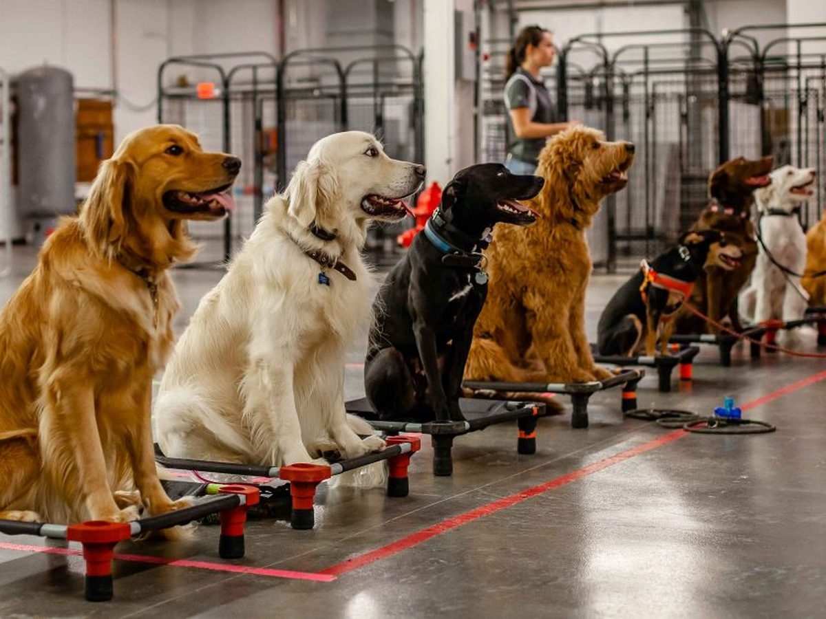 Ученые доказали, что собаками могут управлять роботы