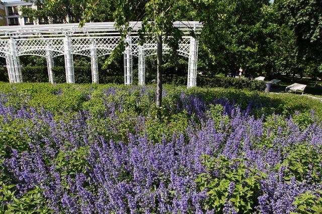 Из городского сада – на 6 соток. Какие приёмы используются в саду им. Баума