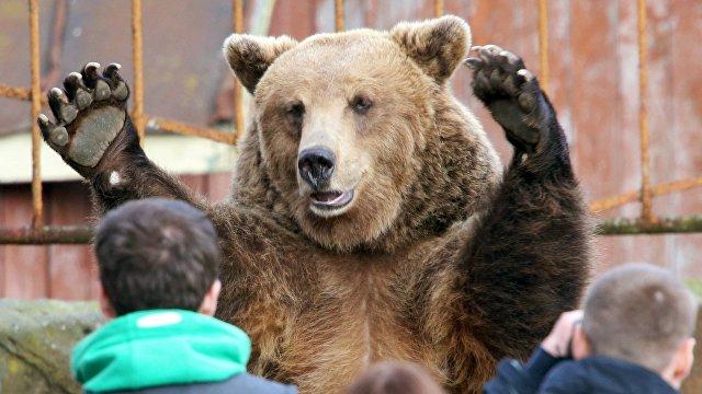 Sina (Китай): почему русские «сильные, словно медведи»? Узнав, что они едят, интернет-пользователи заявили, что теперь им все стало ясно