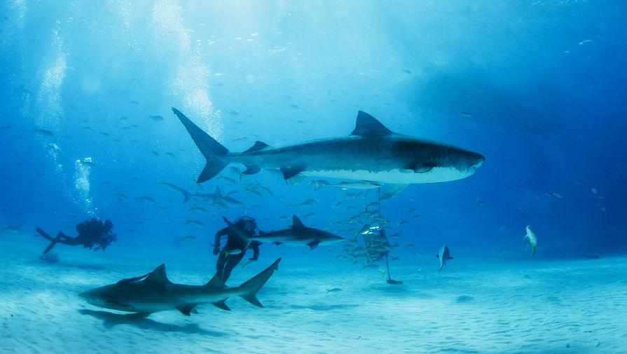 СМИ: кишечник акул может помочь улучшить технологию насосов для жидкости