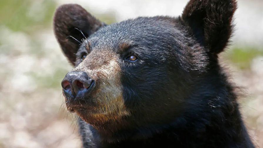 Медведь едва не сорвал матч на Олимпиаде-2020