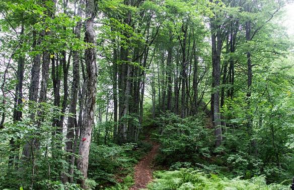 Курорт 'Роза Хутор' презентовал экологическую концепцию 'Зеленый код'