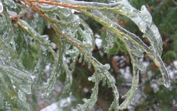 После потепления в Курскую область вернутся морозы до -20 градусов