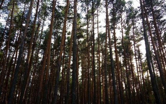 Парк Солянка может стать охраняемой территорией