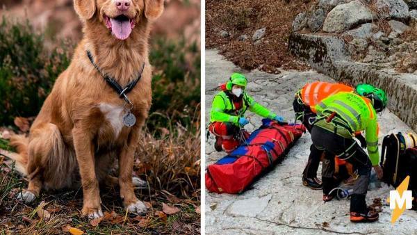 Турист упал со скалы, а с ним и план покорить Альпы. Но жизнью мужчина обязан не Беару Гриллсу, а своему псу