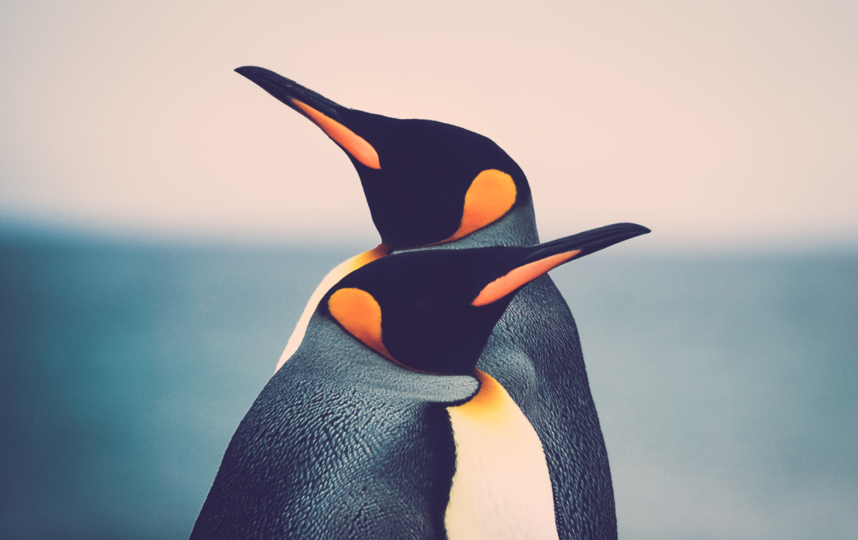 Среди животных возможно родственное скрещивание